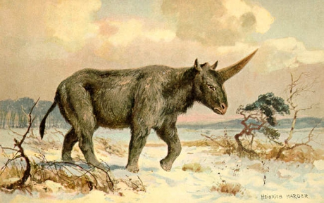 Elasmotherium1.jpg